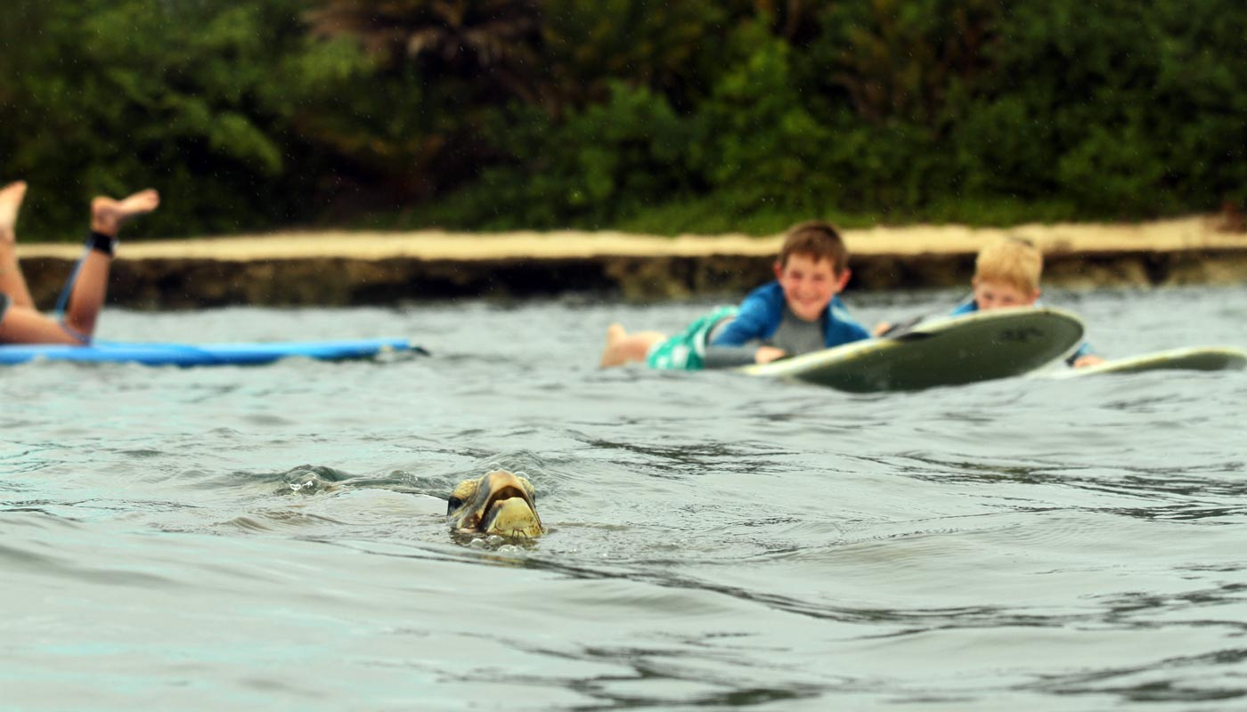 Sea turtle surf lesson